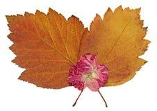 Les feuilles sèches de chute des usines, fleurs et branches, ont isolé l'elem Photographie stock libre de droits