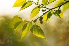 Les feuilles se ferment pendant une lumière de matin photographie stock