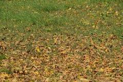 Les feuilles sont jaunes au sol Automne de lame d'automne Photo stock