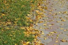 Les feuilles sont jaunes au sol Automne de lame d'automne Photographie stock