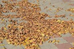 Les feuilles sont jaunes au sol Automne de lame d'automne Photo libre de droits