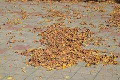 Les feuilles sont jaunes au sol Automne de lame d'automne Photos libres de droits