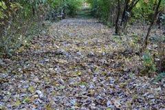 Les feuilles sont jaunes au sol Automne de lame d'automne Photos stock