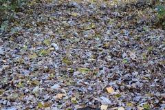 Les feuilles sont jaunes au sol Automne de lame d'automne Image libre de droits