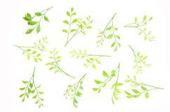 Les feuilles sont rayées ensemble admirablement Image stock