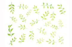 Les feuilles sont rayées ensemble admirablement Photographie stock