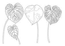 Les feuilles squelettiques ont rayé la conception sur l'illustration blanche de fond illustration stock