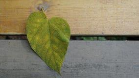 Les feuilles sur le conseil Photographie stock libre de droits