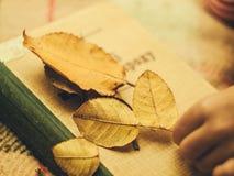 Les feuilles sur le livre Photo stock