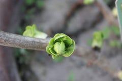 Les feuilles sur le sembler de tige beau photos stock