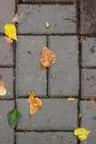 Les feuilles sur le trottoir Images stock