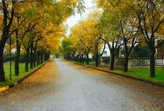 Les feuilles tapissent sur la route photos stock