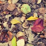 Les feuilles tombées automnales colorées se sont trouvées au sol en parc Image libre de droits