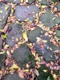 Les feuilles tombées colorées ont rempli de lacunes en pierre d'ardoise photos stock