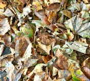 Les feuilles tombées donnent au fond une consistance rugueuse images libres de droits
