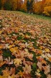 Les feuilles tombées par automne se trouvent sur l'herbe verte image libre de droits