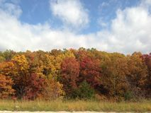 Les feuilles tombent image libre de droits