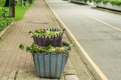 Les feuilles trash dans le bac à ordures au parc pour le camion à ordures photo libre de droits