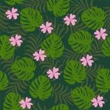Les feuilles tropicales de bel été de la paume de banane verdissent Image libre de droits