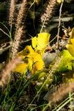 Les feuilles vertes et jaunes poussent des feuilles nature de région sauvage de Sunny Forest symbolique, profondeur de Sunflare B photo libre de droits