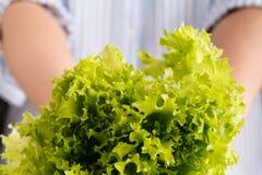 Les feuilles vertes fraîches de laitue de prise de femme se ferment sur le backgrou blanc image libre de droits