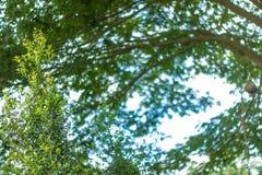 Les feuilles vertes semblent bonnes Image libre de droits
