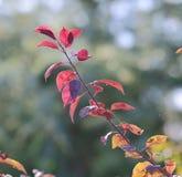 Les feuilles vives de l'automne Image stock