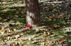 Les feuilles vives de l'automne Images libres de droits