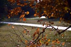 Les feuilles vives de l'automne Photos libres de droits