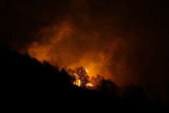 Les feux de forêt la nuit photographie stock libre de droits