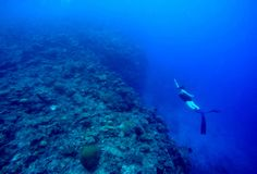 Les Fidji Freediver Image stock