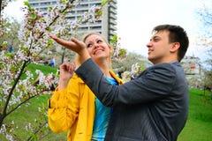 Les filles avec le champagne célébrant dans le ` s de Sakura font du jardinage Image stock