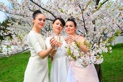 Les filles avec le champagne célébrant dans le ` s de Sakura font du jardinage Photos stock