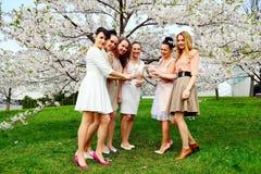 Les filles avec le champagne célébrant dans le ` s de Sakura font du jardinage Images stock