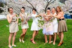 Les filles avec le champagne célébrant dans le ` s de Sakura font du jardinage Photographie stock