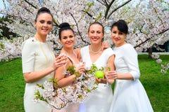 Les filles avec le champagne célébrant dans le ` s de Sakura font du jardinage Photographie stock libre de droits