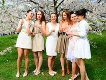 Les filles avec le champagne célébrant dans le ` s de Sakura font du jardinage Image libre de droits