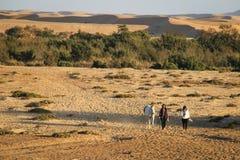 les filles impliquées dans des sports équestres mènent un cheval sur une corde contre le contexte des dunes image libre de droits