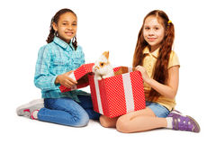Les filles ouvrent la boîte actuelle de rouge avec le vrai lapin Image libre de droits