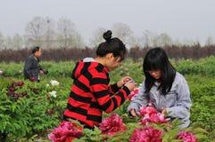 Les filles prennent des photographies à la pivoine Photo libre de droits