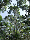 Les Flügel arbres Lizenzfreies Stockbild