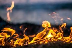 Les flammes du feu brûlant l'herbe photos stock