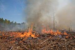 Les flammes et la fumée d'un incendie prescrit brûlent Image stock