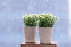 Les fleurs artificielles blanches ont arrangé dans de mini pots de carton Photos libres de droits