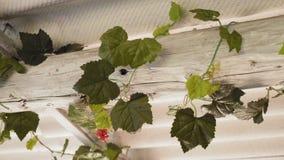 Les fleurs artificielles décorent la poutre en bois sur le toit de l'axe dans le village banque de vidéos
