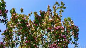 Les fleurs au printemps images libres de droits