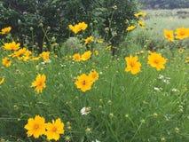 Les fleurs au printemps photo stock