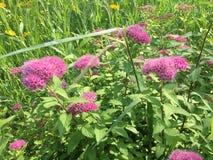 Les fleurs au printemps image stock