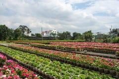 Les fleurs avec le ciel de nuages Photo libre de droits