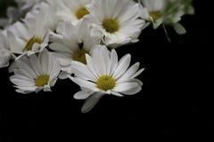 Les fleurs blanches Photographie stock libre de droits